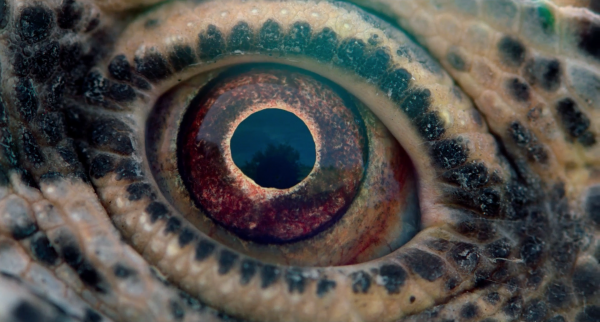voyage-of-time-trailer-malick-images-15