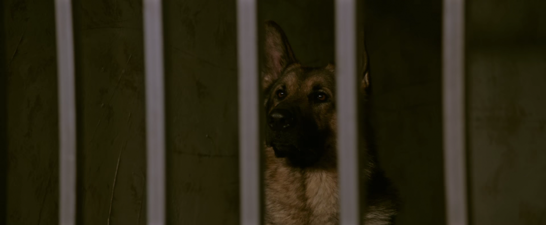 Megan Leavey Movie Images Dog