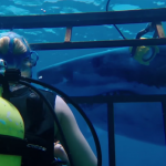 Trailer for '47 Meters Down' Starring Mandy Moore & Claire Holt